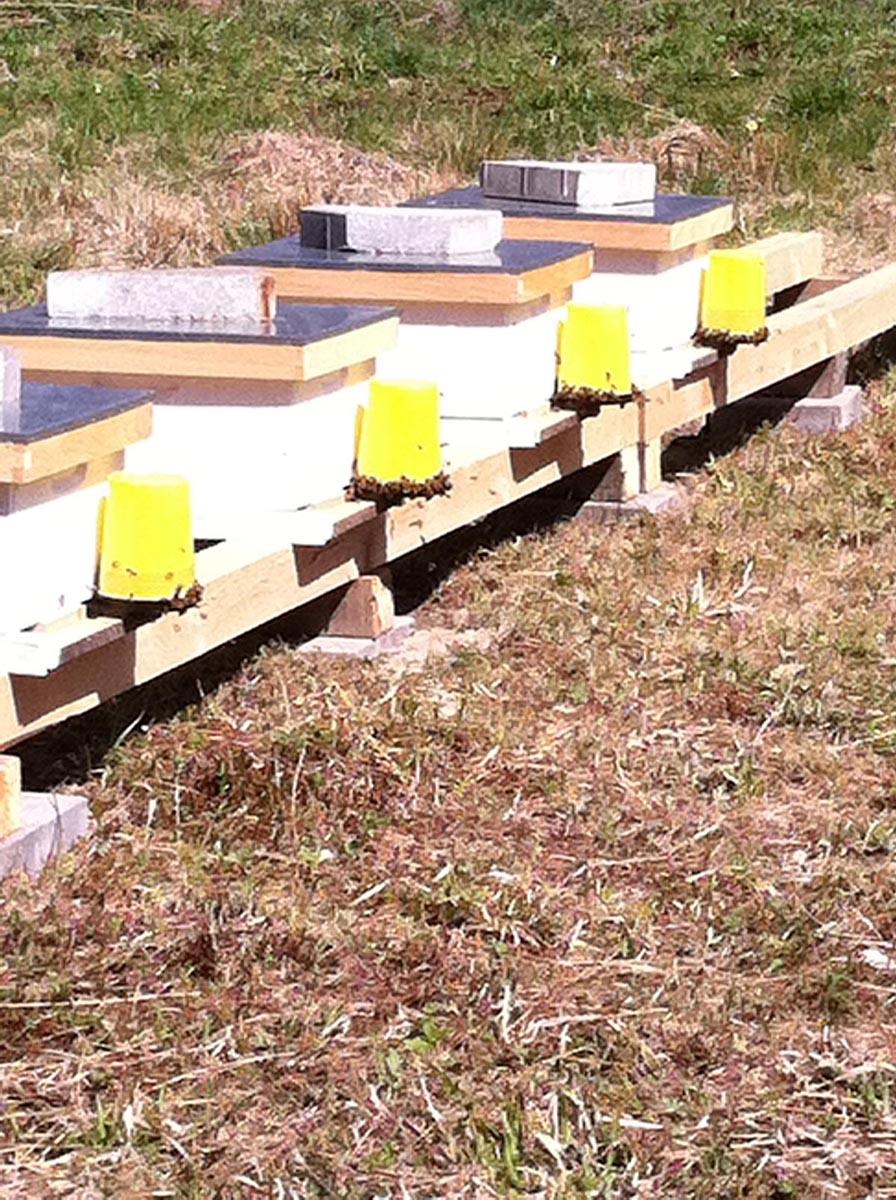 hives2