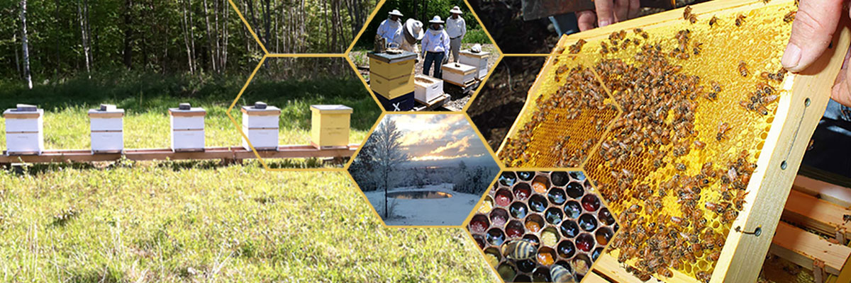 Spicer Bees - learn about beekeeping and beekeeping supplies.